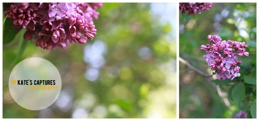 2013-05-06_0010.jpg