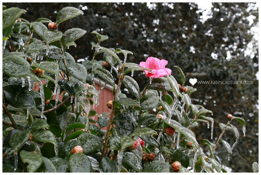 2014-01-29_0004.jpg