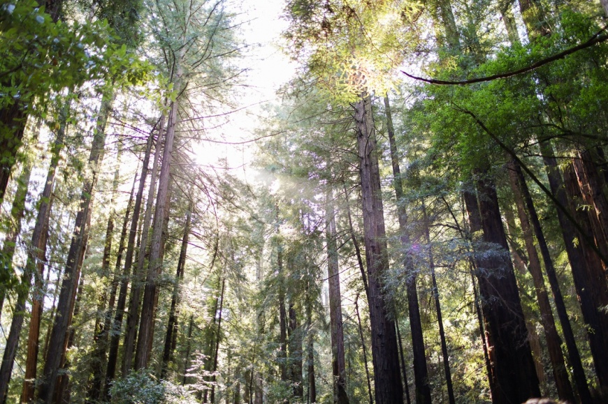Muir Woods Engagement - Kate's Captures_0006.jpg