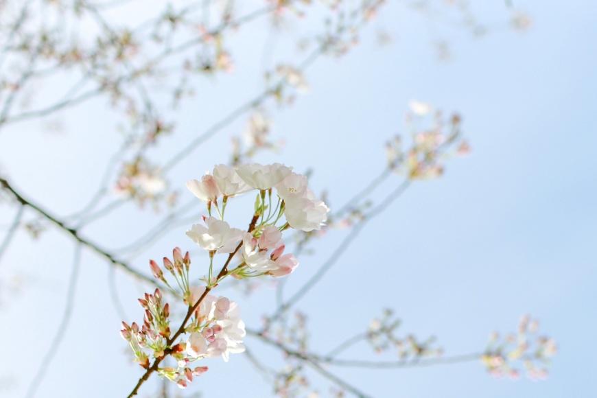 Sonoma-Engagement-Photographer_1043.jpg