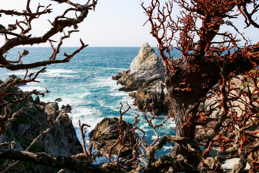 Point-Lobos-Engagement_1022.jpg