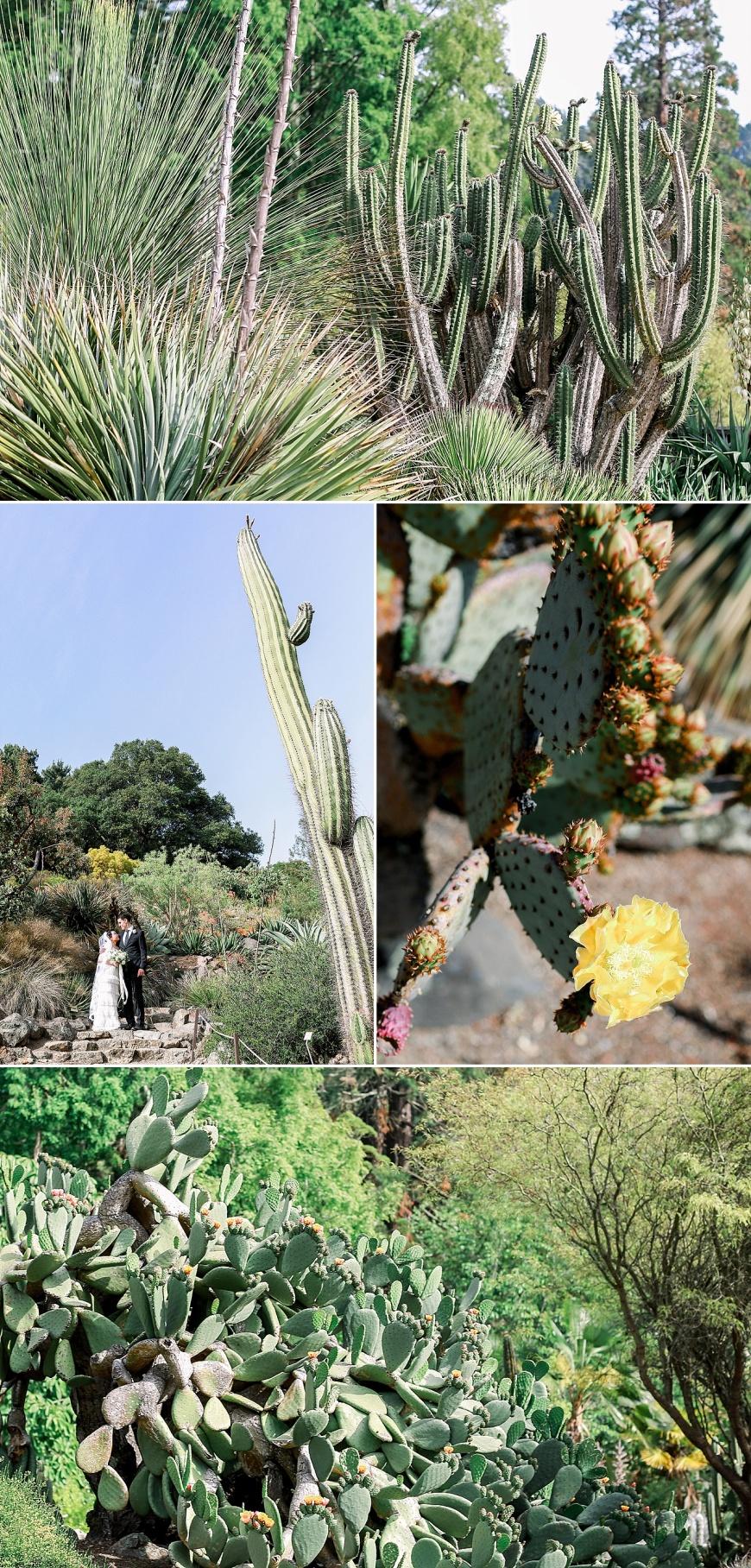 UC-Botanical-Garden-Berkeley-Wedding-Photographer_1061.jpg